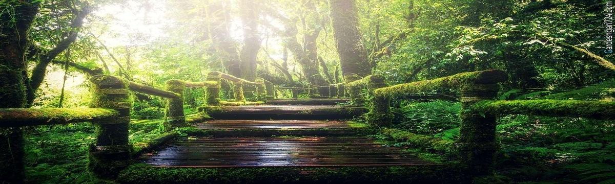 جاده جنگلی صفرابسته